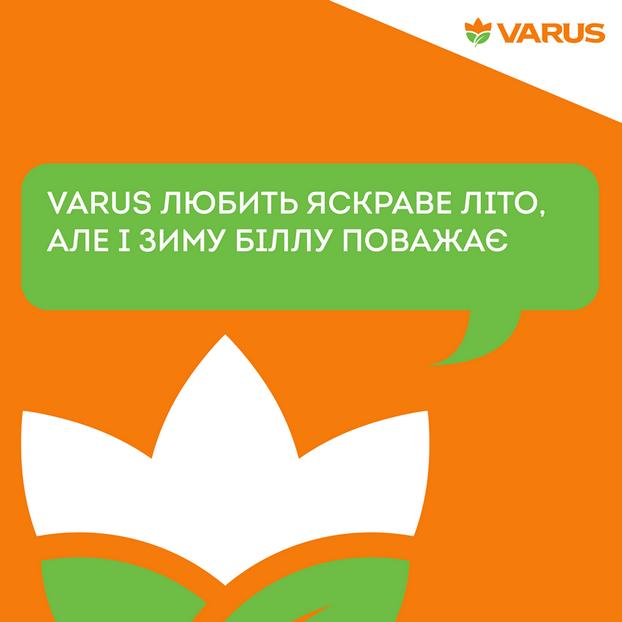 varus_ashan
